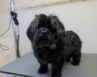 trimfris hond (11)