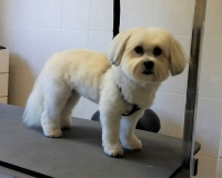 trimfris hond (2)