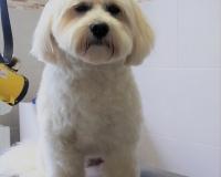 trimfris hond (3)
