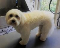 trimfris hond (4)