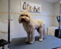 trimfris hond (5)