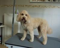 trimfris hond (6)